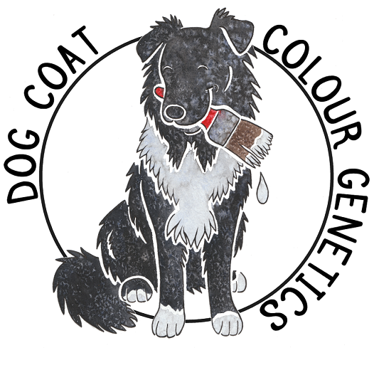 Dog Coat Colour Genetics